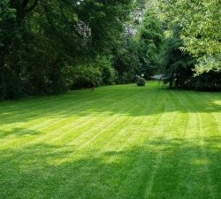 Six amazing tips to save money on yard maintenance