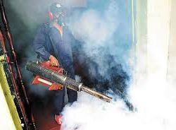 Is Fumigation an Ideal Pest Control Method for You?
