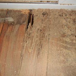 10 Termite Prevention Tips for Homeowners