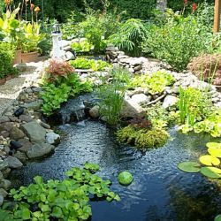 Make your garden look fantastic this spring with a new pond