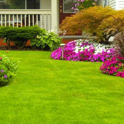 How To Care For Your Flowers In The Lawn/Garden