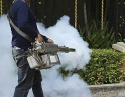A Few Reasons Why You Need Professional Pest Control Services