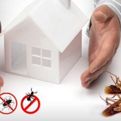 Why Consider Pest Control Services?