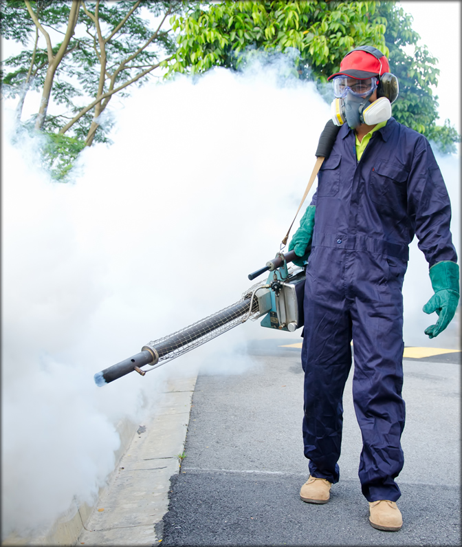 Pest Control Services : A few reasons why you need professional pest control
