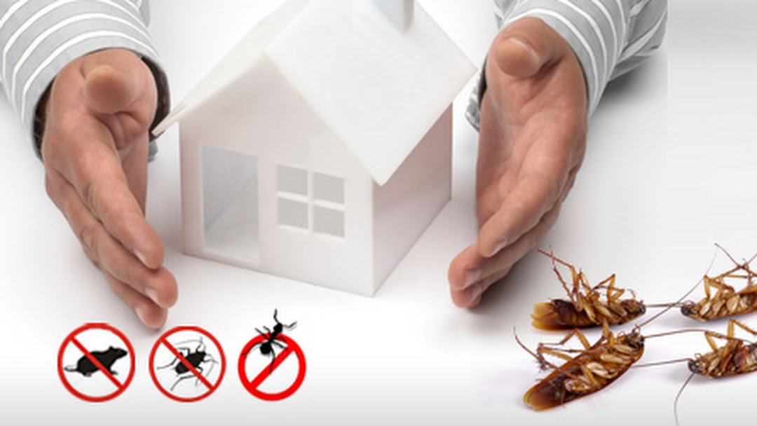 Questions To Ask Your Pest Control Service Provider Before An Inspection