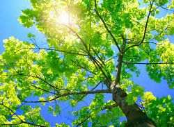 How Does Pruning Your Trees Protects Them and Saves You Money?