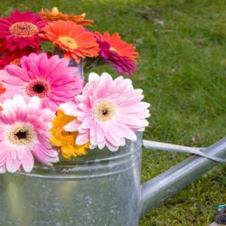 Get the best gardening tips by the expert professional